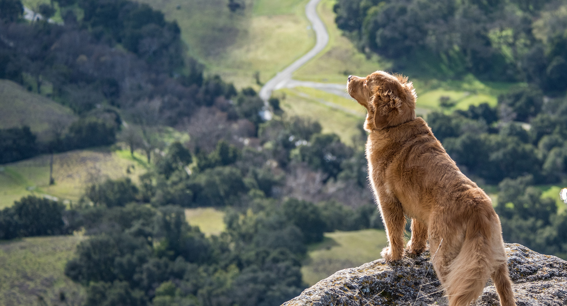 Dog-Friendly Hikes in Orange County