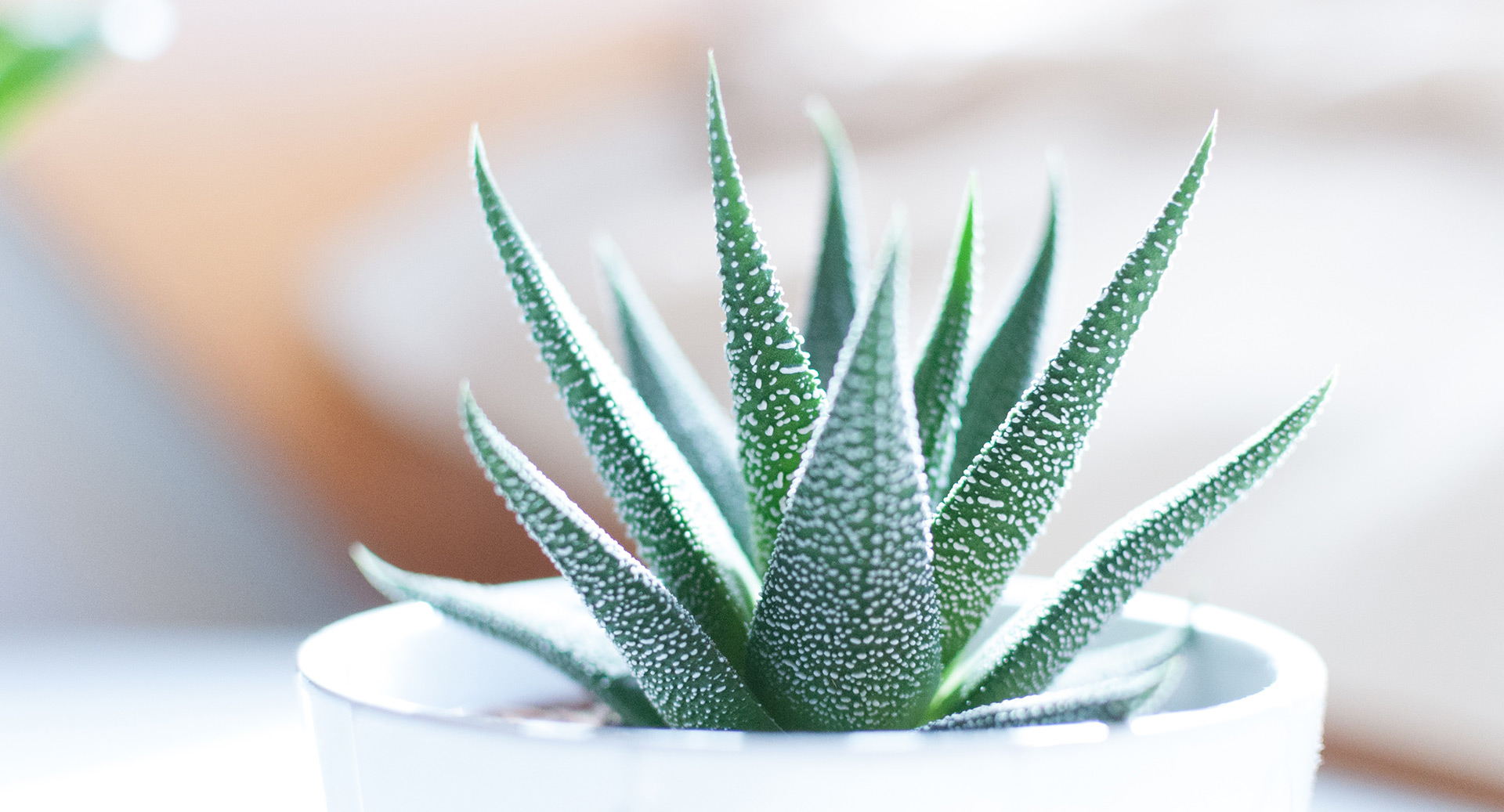 Houseplants You Will Rarely Have to Water