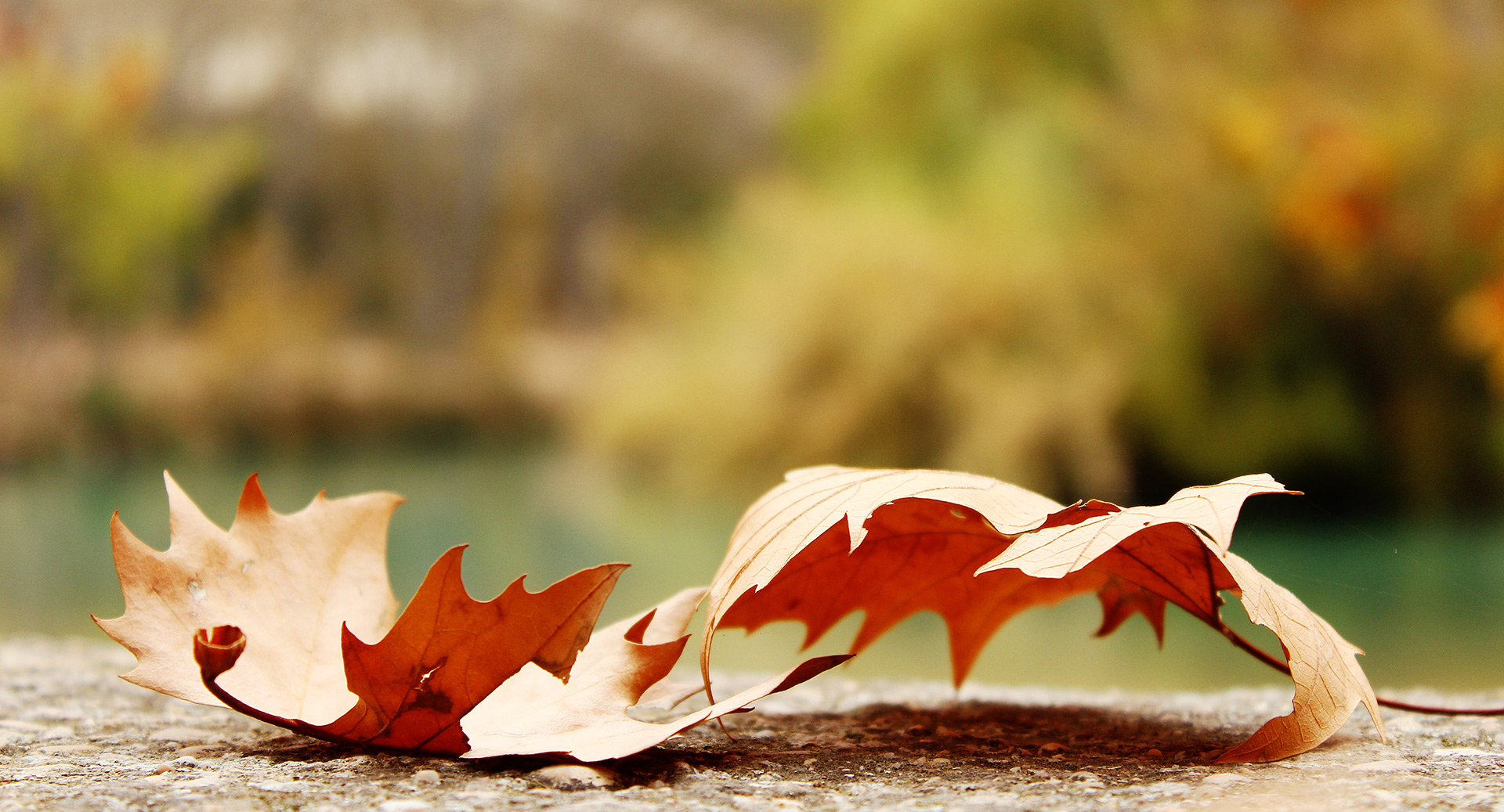 Celebrate Fall With These Orange County Events In October